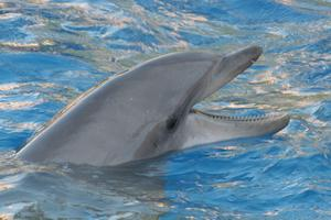 Hur gör jag en tårta med delfiner för en Baby Shower?