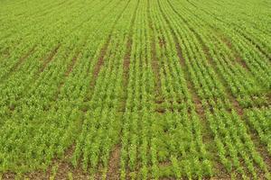 Herbicid och bekämpningsmedel effekter på jord bakterier