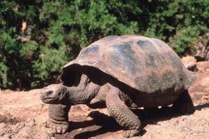 Intressanta fakta om sköldpaddor