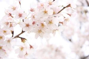 DIY Cherry Blossom bröllopinbjudningar