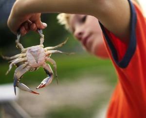 Hur att fånga krabba med ett spö och rulle