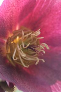 Skugga-älskande perenna växter