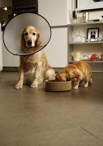 Hur bli av med vårtor på hundar eller husdjur