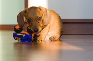 Hur man huset tränar din hundvalp