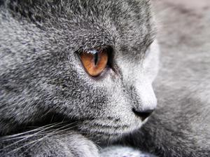 Katt allergi botemedel