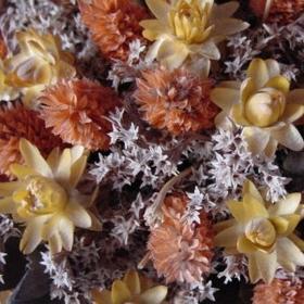 Hur man bevarar blommor med glycerin