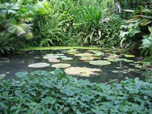 Planteringsjord instruktioner för vatten trädgård växter
