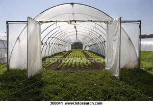 Hur man gör billig mark för växthusgaser växter