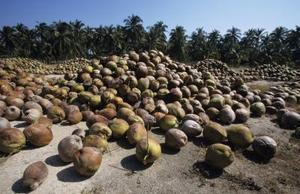 Skillnader mellan ekologisk kokosolja & extra virgin ekologisk kokosolja