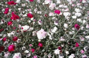 Tester för att veta vilken Bach Flower botar till användning