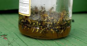 Hemgjord maträtt tvål Bee Trap