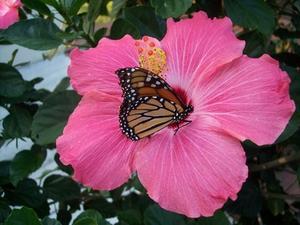 Hur man drar blommor & fjärilar