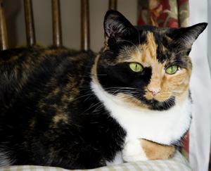 Hur kan jag stoppa en kvinnlig katt från besprutning?