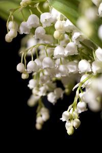 Blommor som hänger upp och ner