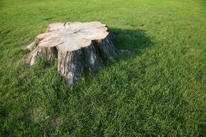 Hur man dödar trädrötter med roundup