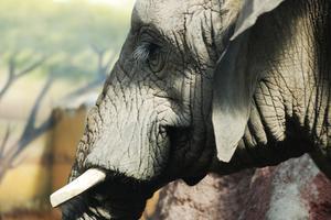 Anvisningar för en Origami elefant