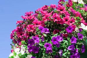 Utomhus växter för behållare