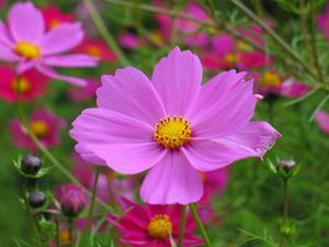 Småskaliga billig blomma trädgård idéer