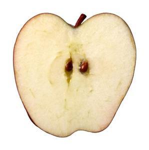 Hur att gro. äpple frön i hushållspapper