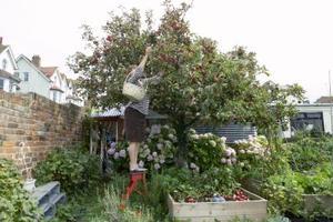 Djup av jord för en köksträdgård