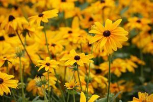 De längsta blommande perenner