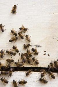 Enkla hem rättsmedel för att bli av med bin