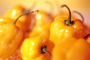 Fakta om Scotch Bonnet paprika