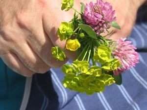 vanliga svenska blommor