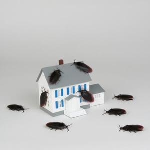 Hur till identifiera & bli av små svarta buggar i mitt hus