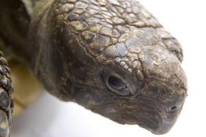 Hur vet jag om en sköldpadda ägg är bördiga eller Infertile