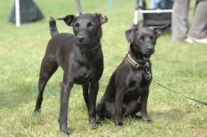 Hem rättsmedel för att stoppa hundar från tugga på sig