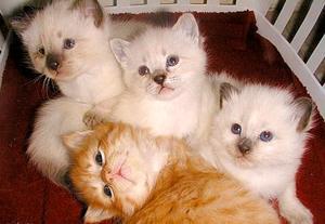 Tecken & symptom på herpes hos katter
