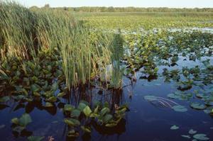 Vilken effekt har människor på sötvatten biome?